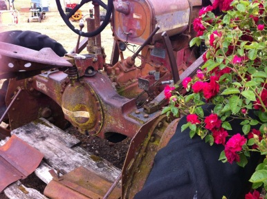 Don't you love the juxtaposition of old and rusty, with blooming flowers?