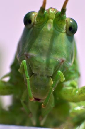 Easy, Now, Grasshopper!